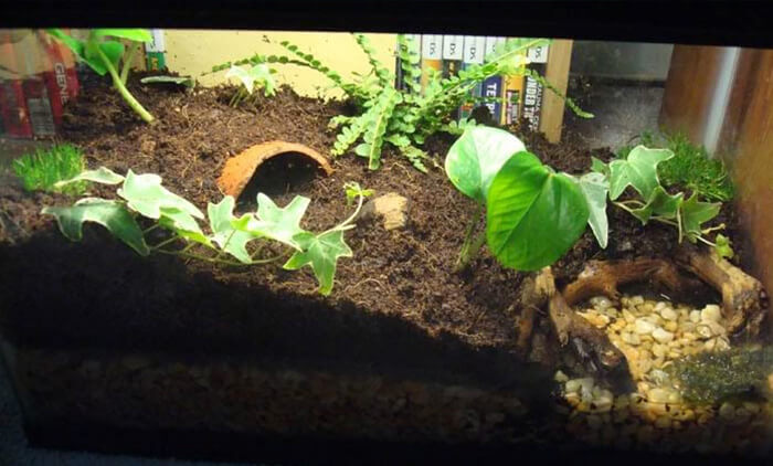 My pixie frog's name is Blob. Here is her setup. Any feedback on this pixie frog setup?