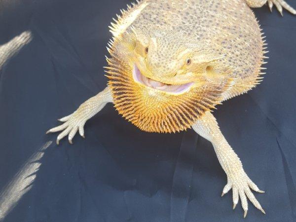 Cricket contest smile