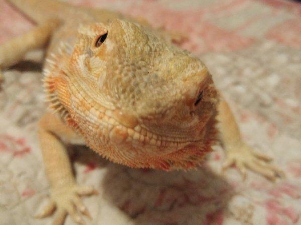 My Dragon Blue sunshine