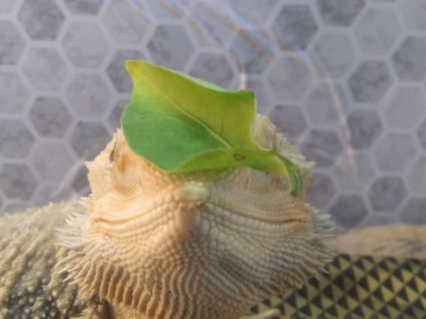From hungry to happy: Atlas the Smiling Dragon
