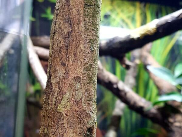 There's a gecko in this pic.  Can you find it?