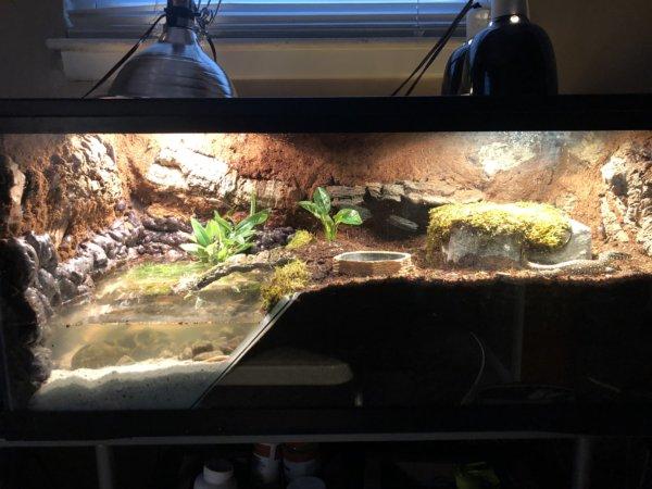 Nile monitor enclosure!