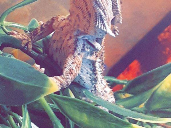 He is so photogenic 🦎🦎🦎