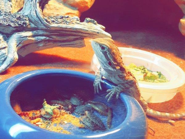 Meet my little guy!!