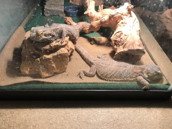 My little critters relaxing