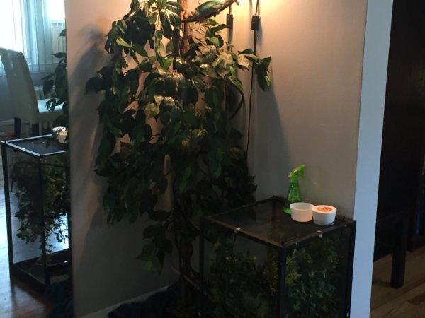 I might have the best chameleon set up ever