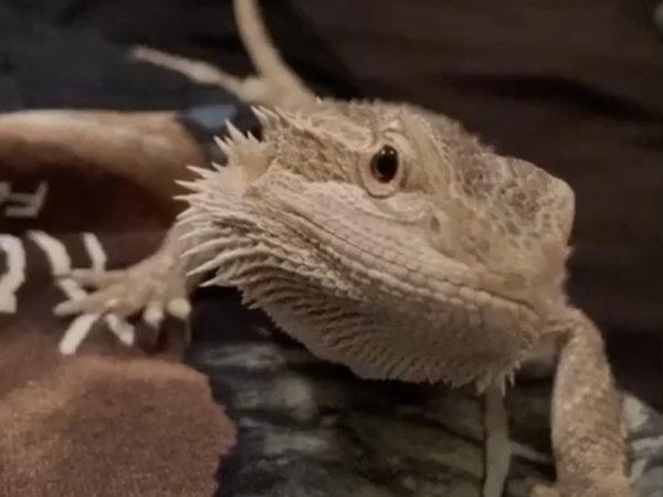 Cricket Contest – Kai The Dragon