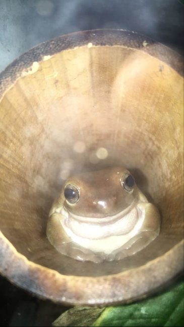 Polite George Would Like Some Yummy Crickets. Pls Give Critter Gold :)