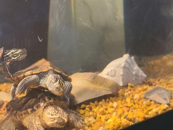 Gitty up turtle 🐢