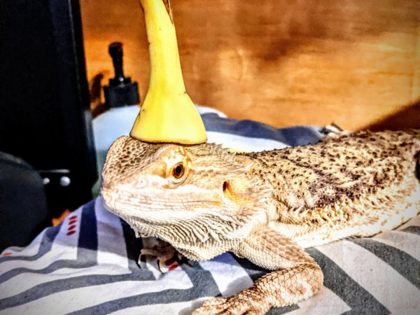 Banana Hat Dragon Fashion