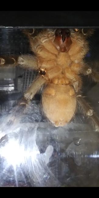 Male or Female?