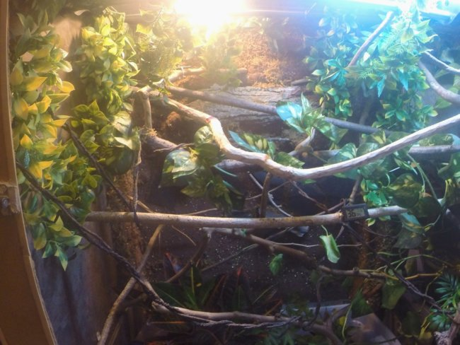 Rexxar's New Enclosure
