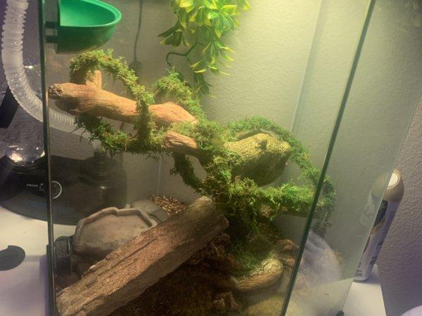 help with humidity & lighting