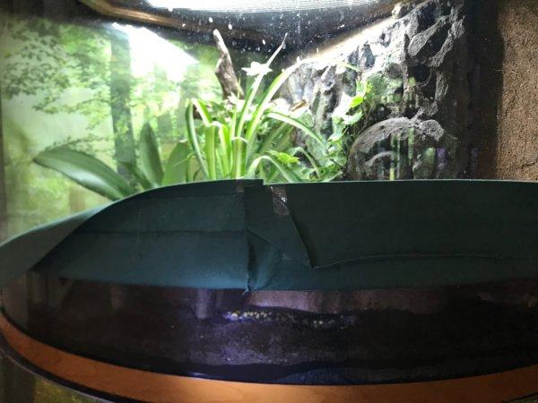 Spotted Salamander paradise