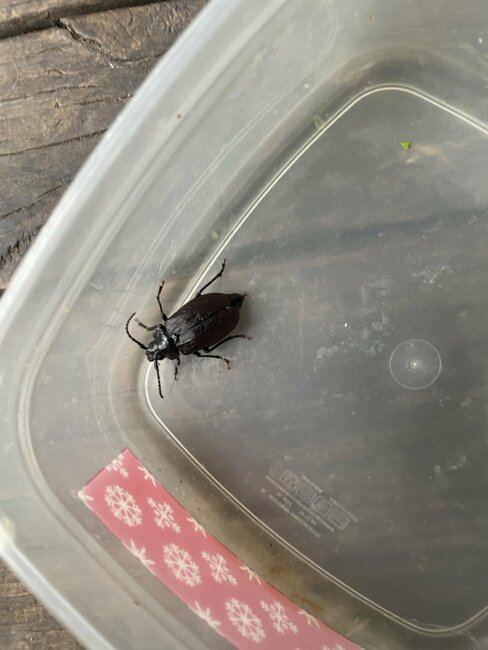 What type of bug is this?