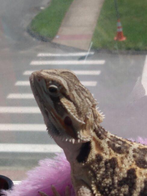 Little Dragon, my baby