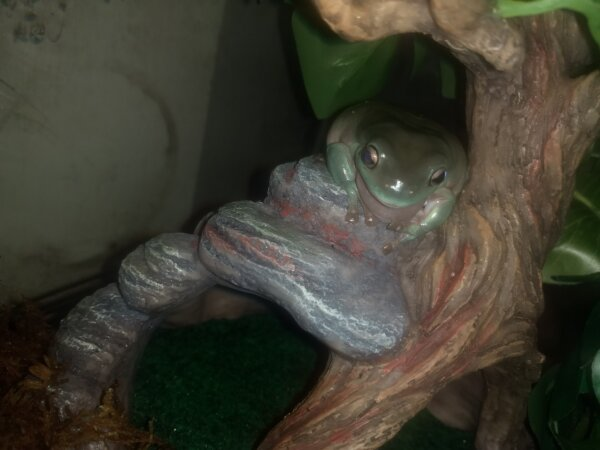 Frog Surrender