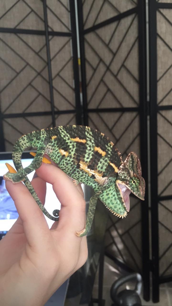 Alduin showing off his vibrant pretty colors